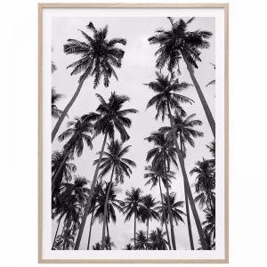 Palm Sky | Framed Print | 41 Orchard