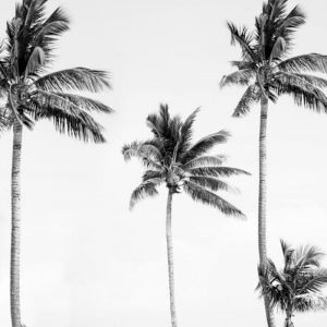 Palm Tree Mural Wallpaper