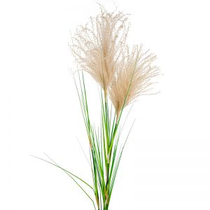 Pampas Grass Spray x 12 stems