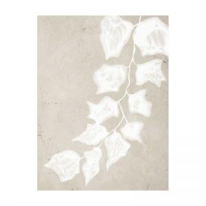 Paper Bark III   Canvas Print