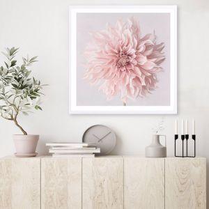 Pastel Pink Dahlia Flower Square Premium Art Print (Various Sizes)