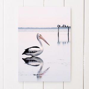 Pelican Pride | Unframed A3 Print by Amelia Anderson