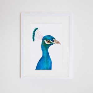 Penny the Peacock Giclee Print   by For Me By Dee