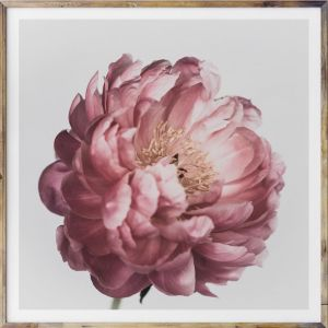 Peonie Dreaming | Square Photographic Art Print | by Donna Delaney