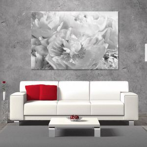 Peony Black and White | Canvas Artwork