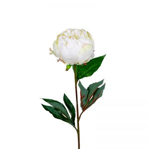 Peony | Half Open 3 Leaves | White - 12 Stems