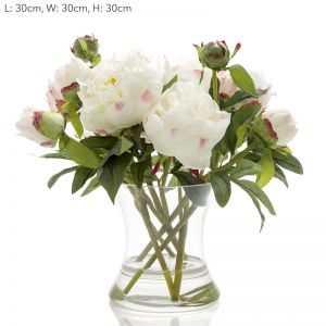 Peony in Water in Glass Vase | White
