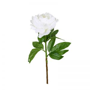 Peony Queen Large with leaves | White - 12 Stems