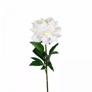 Peony Regal | Large with 3 leaves | White - 12 Stems