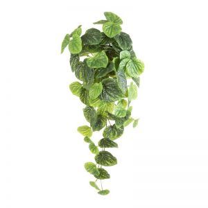 Peperomia Hanging Bush Real Touch x 6 bushes