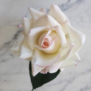 Perfumed Blush Rose