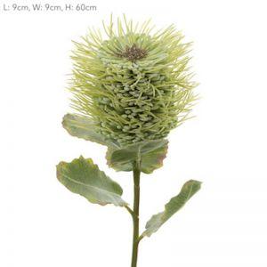 Pincushion Native Flower   Green - 12 Stems