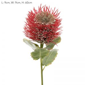 Pincushion Native Flower | Red - 12 Stems