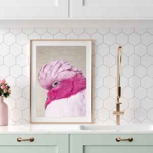 Pink Cockatoo | Shy Galah Canvas Print