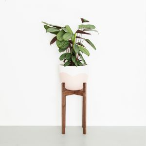 Plant Stands in Walnut | Tall | Jemmervale Designs
