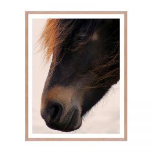 Pony | Framed Print | Artefocus