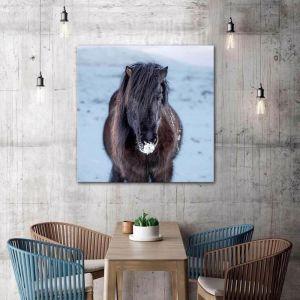 Pony - Frelsi | Canvas Print