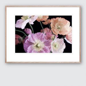 Poppy 1 | Limited Edited Framed Giclee Art Print