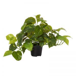 Pothos Faux Plant