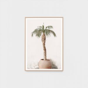 Potted Palm | Framed Photographic Print