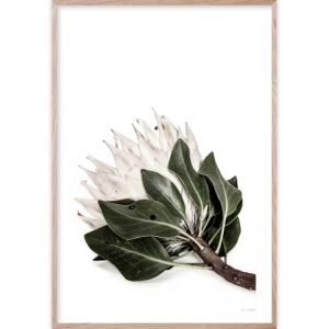 Protea #1 | Framed Giclee Art Print | by Wall Style