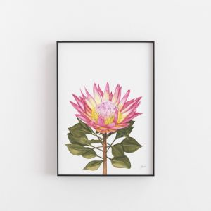 Protea 1 Living Art Wall Print by Pick a Pear | Unframed