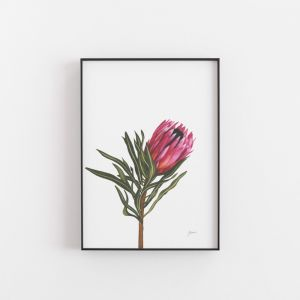Protea 2 Living Art Wall Print by Pick a Pear   Unframed