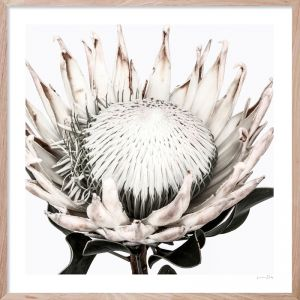Protea #3 | Framed Giclee Art Print by Wall Style