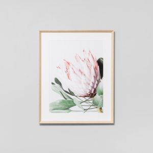 Protea Flower | Framed Print