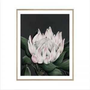 Protea Flower | Framed Print | P4033-2