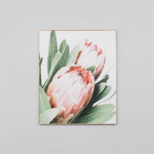 Protea | Framed Canvas