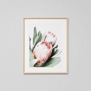 Protea | Framed Print