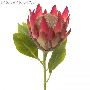Protea King | Dark Pink