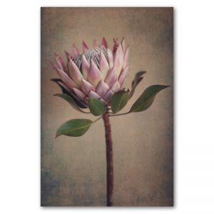 Protea Still   Art print by Natascha van Niekerk   Unframed