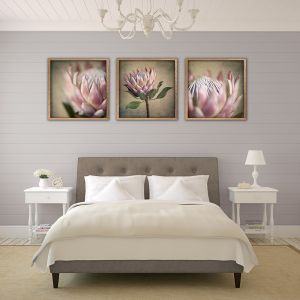 Protea Still | Set of 3 Art prints | Unframed