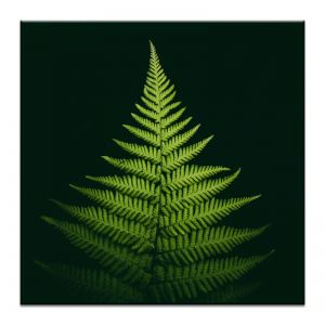 Pyramid Fern | Prints and Canvas | Photographers Lane