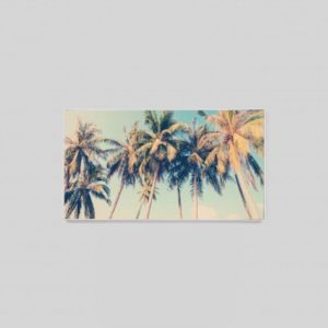 Queensland Palms | Coloured Photographic Print
