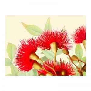 Red Gum Flowers | Framed Art Print on Acrylic