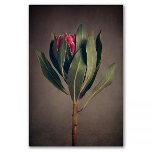 Red Protea 1 | Art print by Natascha van Niekerk | Unframed