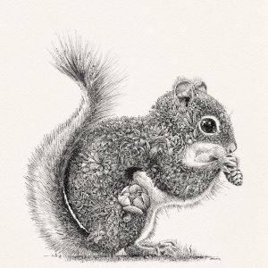Red Squirrel   Limited Edition Giclée Print