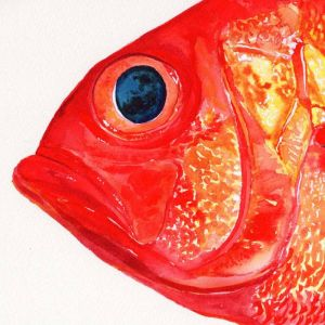 Redfish | Original Watercolour Artwork