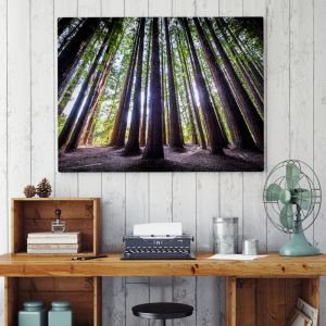 Redwood Forest | Australian Landscapes | Limited Edition Photographic Print or Canvas
