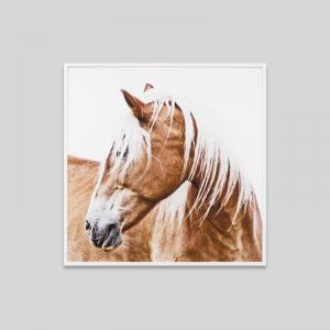Resting Mare | Framed Photographic Print