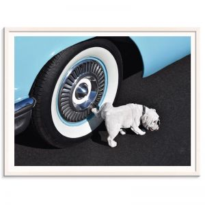 Retro Hound | Prints and Canvas by Photographers Lane