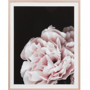 Rose Noir 3 | Framed Print