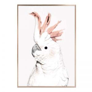 Rosette Cockatoo | Framed Print