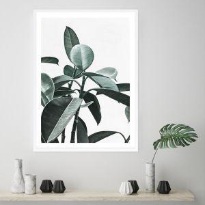 Rubber Plant II Premium Art Print (Various Sizes)