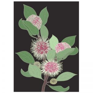 Sea Urchin Hakea | Art Print