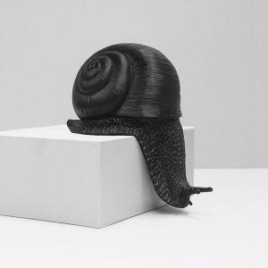 Shelf Snail | Black