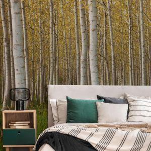 Silver Birch Forest   Wallpaper